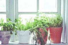 5 Tips for Gardening Inside. From fewer trips to the grocery store to better health, bringing the green outdoors inside has many benefits. But there's a thin line between an indoor oasis and a soiled grave of shriveled leaves—especially for those who lack the green thumb. These basic tips can help get you started. #indoorgardens #gardengrowingtips