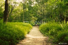 Photo: European forest