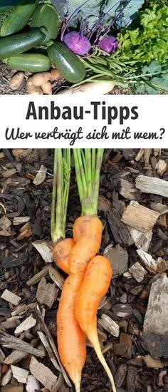 Wer verträgt sich im Gemüsegarten mit wem?