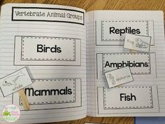 Animal classification interactive notebook- sorting animals into the correct groups