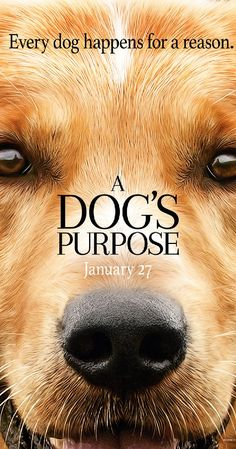Directed by Lasse Hallström.  With Britt Robertson, Josh Gad, Dennis Quaid, K.J. Apa. A dog looks to discover his purpose in life over the course of several lifetimes and owners.