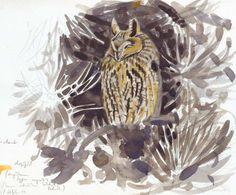 Long-eared Owl sketch - Picture 12 in 2D media: Szabolcs Kokay -
