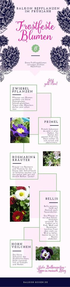 Balcony flowers for spring - Pflanzideen Early Spring Outfits, Early Spring Flowers, Balcony Flowers, Grow Your Own Food, Plant Wall, Flower Boxes, Container Gardening, Urban Gardening, Garden Inspiration