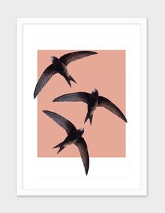 """Flying swallows"", Numbered Edition Fine Art Print by Pilar Bouzas - From $25.00 - Curioos"