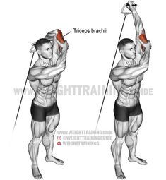 Standing overhead one-arm cable triceps extension. An isolation exercise. - Standing overhead one-arm cable triceps extension. An isolation exercise. Standing overhead one-arm cable triceps extension. An isolation ex. Triceps Workout, Biceps And Triceps, Fun Workouts, At Home Workouts, Cable Workout, Cable Machine Workout, Fitness Bodybuilding, Workout Machines, Sport Motivation