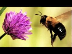 ▶ Animals that Hibernate - YouTube Classical Conversations Cycle 2 Week 5