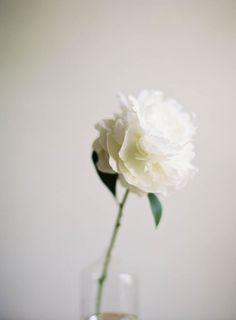 perfect white peony | jenhuangblog.com