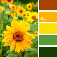"""""""dusty"""" green, bright orange, bright yellow, carrot-orange, color of green leaves, color of leaves, color of sunflowers, colors of autumn 2018, dark green, dusty shades of green, green, green color, lime green, marsh shades of green, Orange Color Palettes, saturated"""