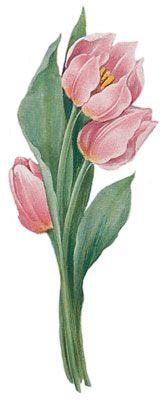 Tulips - Image 1                                                                                                                                                                                 Mais