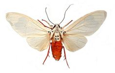 incredible site with butterfly or moth #butterfly #moth #science #nature