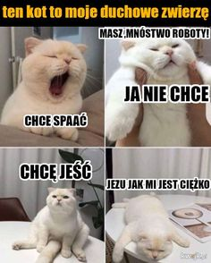 Read memy from the story karuzela smiechu by slodkiSZCZUR with 108 reads. Wtf Funny, Funny Cute, Hilarious, Polish Memes, Weekend Humor, Funny Mems, Reaction Pictures, Cat Memes, Kittens Cutest