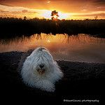 Sophie's sunset... by dewollewei