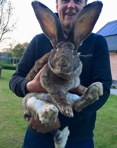 Flemish giant rabbits... meat and fur and pets?