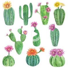 Watercolor cactus clip art. Watercolor exotic plants with flowers in the pots for instant download. #drawing #drawingideas Cactus Drawing, Cactus Painting, Watercolor Cactus, Watercolor Art, Cactus Png, Cactus Flower, Cactus With Flowers, Cactus Clipart, Cacti And Succulents