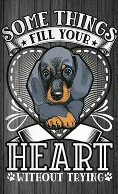 Dachshund Quotes, Dachshund Art, Daschund, Sausage Dogs, Dog Stories, Water Slides, Random Pictures, Sign Quotes, Bowie