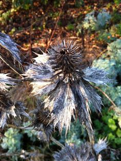LEICESTERSHIRE AND RUTLAND GARDENS TRUST: Wordless Wednesday