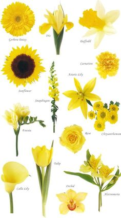 """Flower names by Color Have you ever found a picture of a bouquet and wondered, """"What is that flower?"""" Here is a collection of flower names sorted by color. A few bouquet examples are at the bottom and so… Yellow Wedding Colors, Yellow Theme, Colour Yellow, Light Yellow Weddings, Colorful Flowers, Beautiful Flowers, Yellow Spring Flowers, Yellow Flowers Names, Beautiful Pictures"""