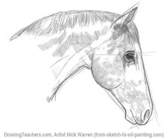 Easy Horse Drawings In Pencil Images & Pictures - Becuo Easy Horse Drawing, Horse Head Drawing, Girl Drawing Easy, Drawing Heads, Horse Drawings, Animal Drawings, Pencil Drawings, Drawing Animals, Drawing Videos For Kids