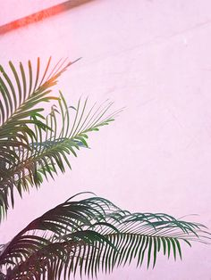 all pink buildings with palm tree shadows soma bay egypt palms on print