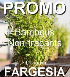 10 Meilleures Images Du Tableau Bambous Bambou Fargesia