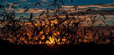Cedarville Sunset by Kristin Hughes on 500px