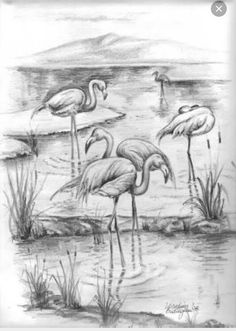 Çizim Flamingo Landscape Pencil Drawings, Pencil Art Drawings, Bird Drawings, Animal Drawings, Drawing Sketches, Drawing Sites, Line Drawing, Arte Dc Comics, Pencil Shading