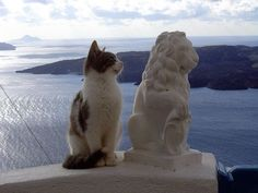 Pretty Cats, Beautiful Cats, Beautiful Horses, Animals Beautiful, Animals And Pets, Cute Animals, Fancy Cats, Buy A Cat, Cat Art