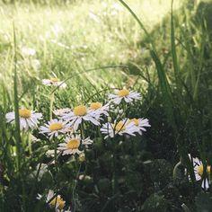 Der Weg ins Ungewisse… Cheap Web Hosting, Ecommerce Hosting, About Me Blog, Plants, Plant, Planting, Planets