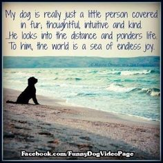 See more great posters, pictures,quotes and cartoons about dogs by liking us on Facebook https://www.facebook.com/funnydogvideopage