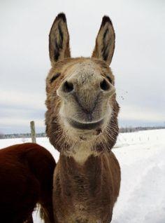 Donkey. :)
