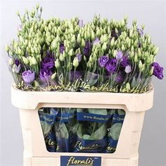 Eustoma Lisianthus Rosita (Double) Purple - 2018 Wedding Trend: Ultra Violet Purple. For lilac and purple wedding flowers to suit your colour scheme, visit our website at www.trianglenursery.co.uk/fresh-flowers!
