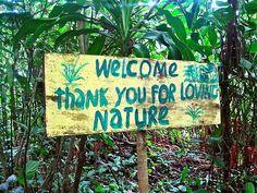 Image via We Heart It #hippie #hippy #nature #spiritual