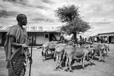 A black and white portrait of a Maasai herdsman and his donkeys. Moon Watch, Mount Kilimanjaro, Arusha, Black And White Portraits, Donkeys, Tanzania, Fine Art Photography, My Life, Around The Worlds