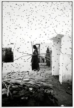 "Graciela Iturbide ::  The Cemetery, Juchitan, Mexico, 1988 [in her website, part of the series Birds] more [+] by this photographer ""This image is part of Graciela Iturbide's series on the Juchitan..."