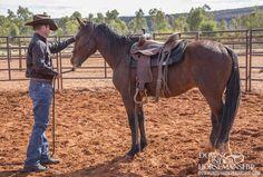 Downunder Horsemanship   Training Tip: Don't Create a Cinchy Horse