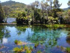 Takaka – Reisebericht vom Geheimtipp auf Neuseelands Südinsel
