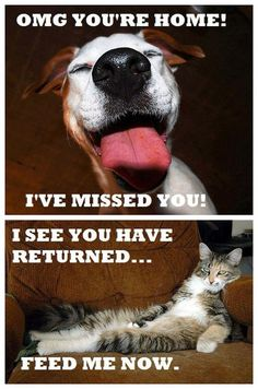 Dogs Vs. Cats: Emotions This is my cat every freakin time I walk through the door.