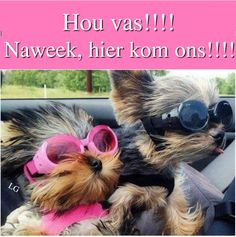 Goeie More, Good Morning Good Night, Afrikaans, Positive Thoughts, Happy Friday, Funny Pictures, Funny Pics, Qoutes, Beautiful Pictures
