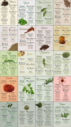 Culinary Infographics - Spices & Herbs