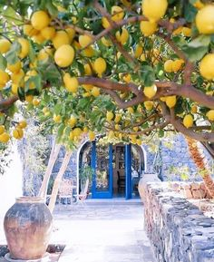 Photo by Have you ever visited this enchanting place? & The post Lemon spot Amalfi Coast, Italy. Photo b appeared first on . Vacation Trips, Dream Vacations, Beautiful World, Beautiful Places, Wonderful Places, Amalfi Coast Italy, Travel Abroad, Travel Trip, Solo Travel