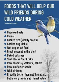 Bird Seed Feeders, Diy Bird Feeder, Wild Bird Food, Wild Birds, Homemade Bird Feeders, Birds And The Bees, How To Attract Birds, Backyard Birds, Back To Nature