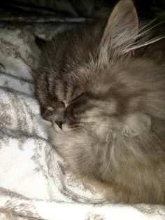 Momo The Cat, Cats, Animals, Gatos, Animales, Animaux, Animal, Cat, Animais