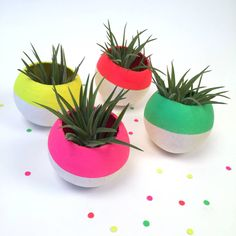 Our neon pink air plant pods make gorgeous handcrafted living gifts.We take the utmost care when crafting your pods and selecting your air plant, but we do need to let you know that due to the organic nature of this product, there are slight size and shape variations. This makes each and every air plant pod completely unique. Also available to purchase in other colourways and in multiples - please see our other air plant pod listings.These pods have been lovingly painted in our Wiltshire ...