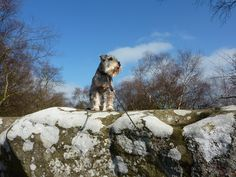 At Brimham Rocks...