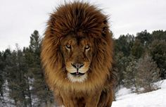 Lions, tigers and bears: British photographer Jonathan Griffiths ...