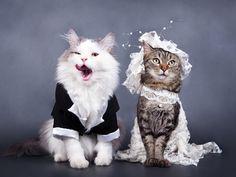 Cat wedding - Cats & Animals Background Wallpapers on Desktop ...