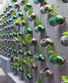 Create a plant wall: http://www.goodhousekeeping.co.za/en/2012/12/how-to-create-a-vertical-garden/