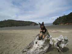 Kakamatua beach, great place to walk the dogs.