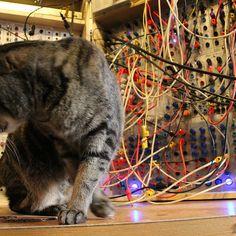 CatSynth pic: Rumble Sumthin' (Serge Modular)