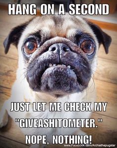 Pugs know an idiot when they see one! Funny Dog Memes, Funny Animal Memes, Cute Funny Animals, Cute Baby Animals, Funny Dogs, Animal Jokes, Pug Pictures, Funny Animal Pictures, Pug Pics
